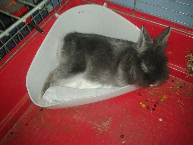 Náš králík bydlí v hajzlíku....