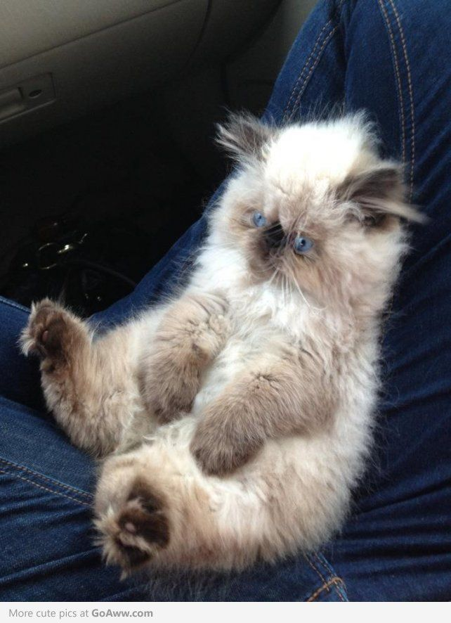 OH GOD. It looks like an ewok and cat and teddy bear had fluffy mutant babies