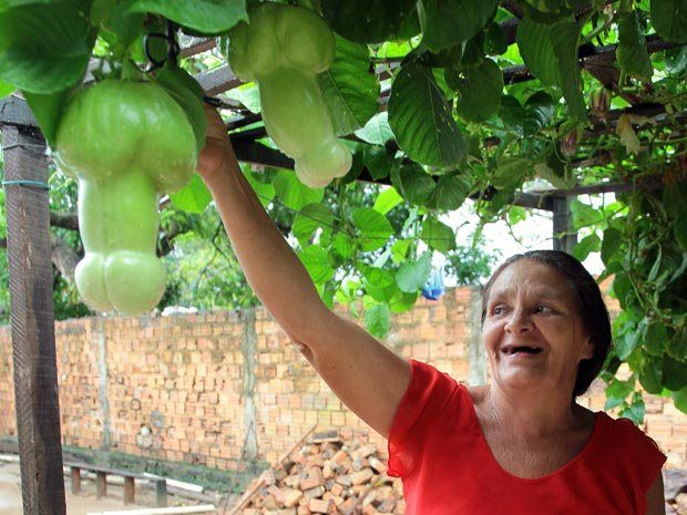 """Saw this and just had to pin it.. :P This is actually a vegetable growing in Brazil called  """"Chuchu"""" pronounced shoo-shoo.  Well well well....""""""""They DO grow on Trees"""""""" LOL.."""