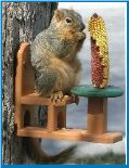 Squirrel Feeders for Corn Cobs, Peanuts, Squirrel Bungee, Munch Box and More