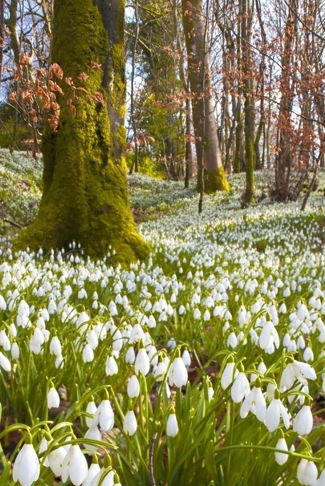 Woodland Serenity, Romania, www.romaniasfriends.com