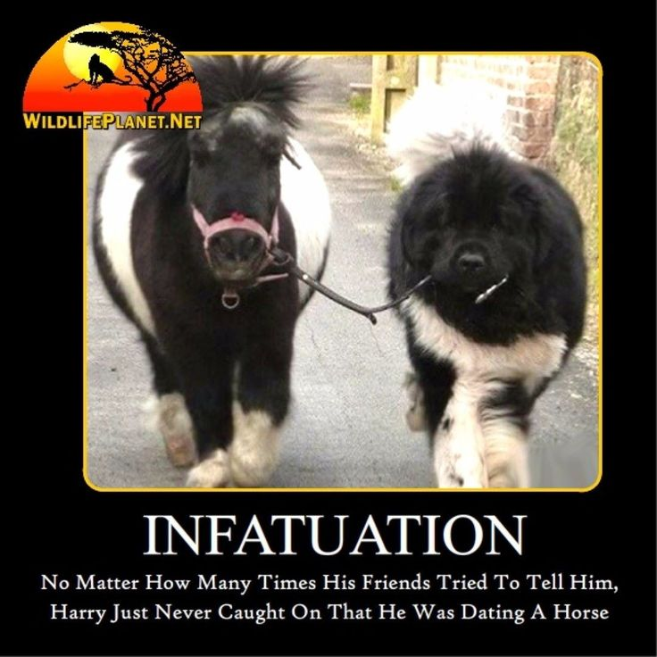 #dog #dogsofinstagram #dogs #cute #dogwalking #dogsofnyc #dogstagram #puppy #dogoftheday #doglover #dogwalker #dogslife #doglife #nature #dogs_of_instagram #instadog #dogwalkersofinstagram #walkingthedog #walking #doglovers #doggy #puppies #pets #pet #petsagram #petstagram #petsofinstagram #petsofinsta #animals #luna