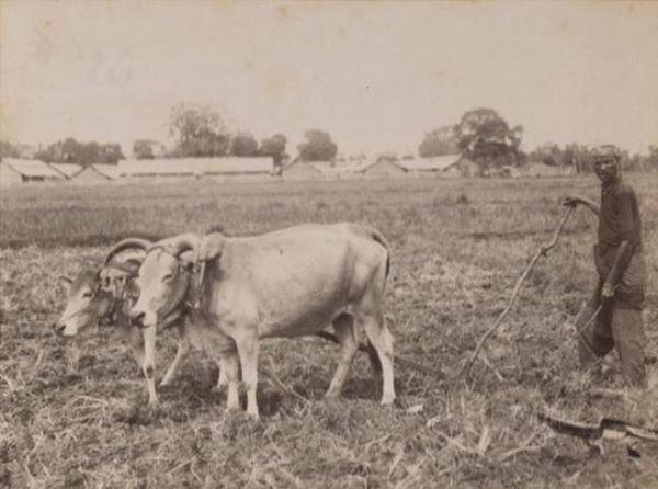 """Petani Aceh pada masa lampau. Potret tahun 1898 di Cot Mancang (Aceh Besar). Inilah kehidupan petani Aceh semasa kolonial Belanda berada di Aceh. Tidak jauh berbeda dengan kondisi saat ini. Lupakan sejenak tentang perang dan para tokoh yang terlibat di dalamnya. Leubeh get ta kaloen kondisi mayoritas rakyat Aceh pada masa nyan. Nostalgia masa silam yang tetap menarik untuk di-""""selami"""". [media-kitlv.nl]"""