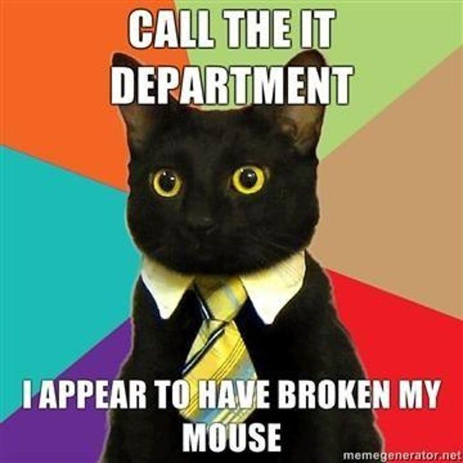 15 of the Absolute Best Business Cat Memes