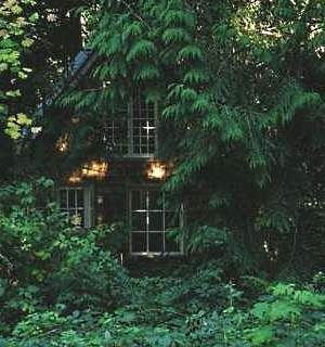 An  over-grown garden can give a sort of romantic feeling to the house, and when the vegetation hugs the walls, it not only provides shade through the windows, but it is a lovely view of natural surroundings.