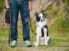 Konzentrationsübungen für den Hund trainieren den Zusammenhalt zwischen Hund und Mensch - und die Geduld des Halter. Übungen zum Nachmachen.