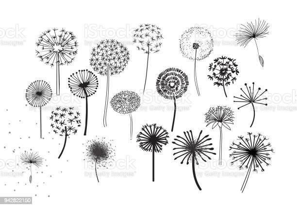 decorative elements for design dandelions flowers blooming hand in 2021 lowenzahn zeichnung vektorgrafik kostenlos huhn vektor rastergrafik