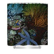 A Blue Starfish With Colorful Coral Shower Curtain
