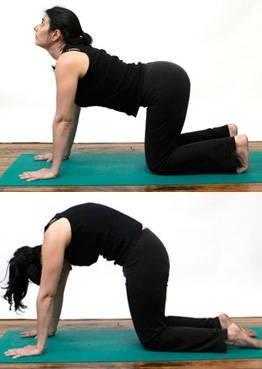 20 best yoga poses for back pain images on pinterest