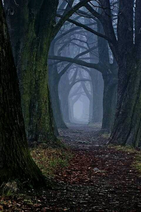 Shrouded Forest, Slavakia