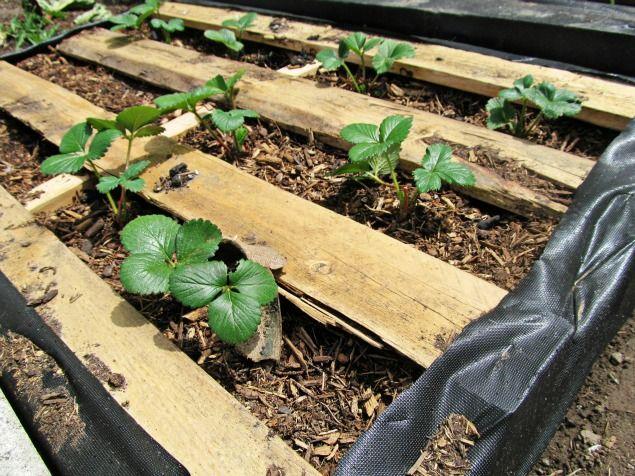 Diy pallet garden how to make raised wood pallet garden for Vertical pallet garden bed