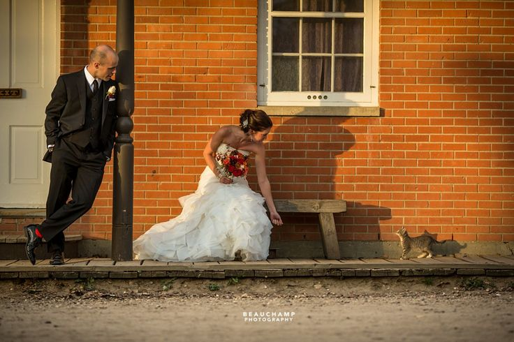A spontaneous moment captured of a Bride and Groom at Fort Edmonton Park, with a little kitten. See more images from this wedding by Beauchamp Photography at: https://www.facebook.com/media/set/?set=a.736453626382891.1073741851.149173701777556&type=3