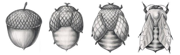 Beecorn- The Metamorphosis by JacquelineRae on deviantART