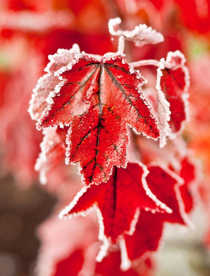 Autumn frost. Perfection!