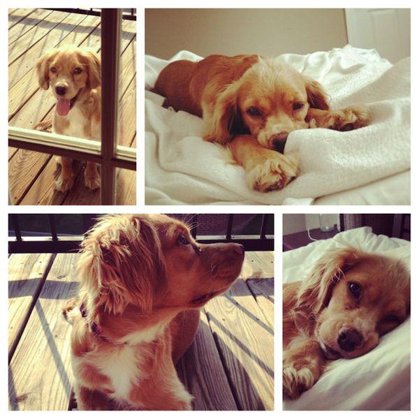 10 adorable pets :-) #puppies #cats