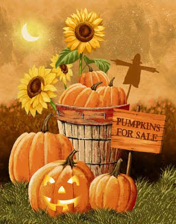 AUTUMN / FALL, PUMPKINS FOR SALE