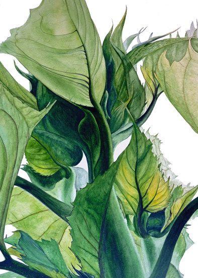 Foglie di girasole - grande stampa botanica, 11 x 16 a, girasoli, foglie, verde acquarello botanico, illustrazione botanica