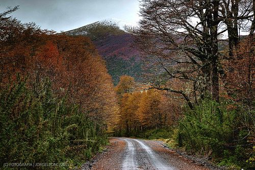 Camino otoñal - P.N. Puyehue (Patagonia - Chile)
