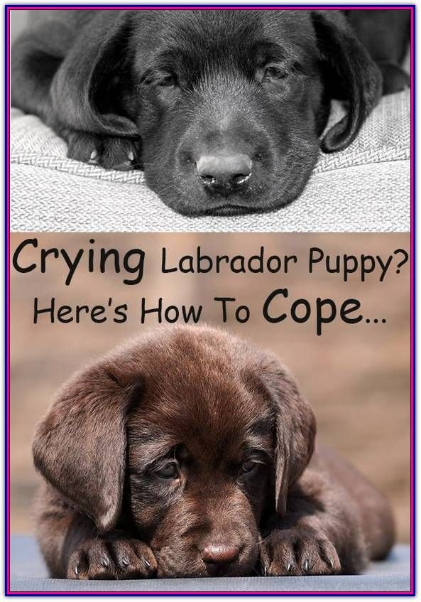 Finding Your Best Options For Puppy Obedience Training Dog Training Tips And Tricks Puppy Training Lab Puppy Training Labrador Puppy