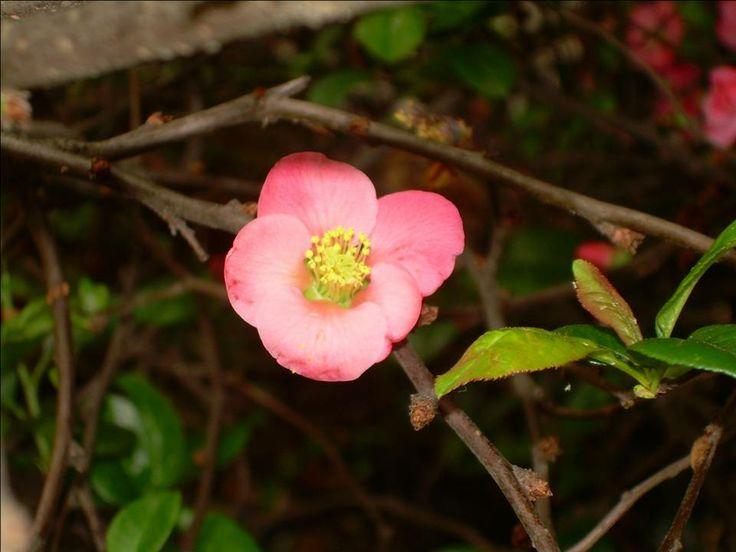Delicadeza en mi patio - sweet flower