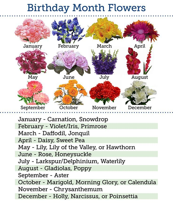 Flowers By Month Birthday Flowers Month Balsa Circle Blog Erin