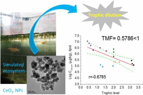 Distribution, Bioaccumulation, Trophic Transfer, and Influences of CeO2 Nanoparticles in a Constructed Aquatic Food Web