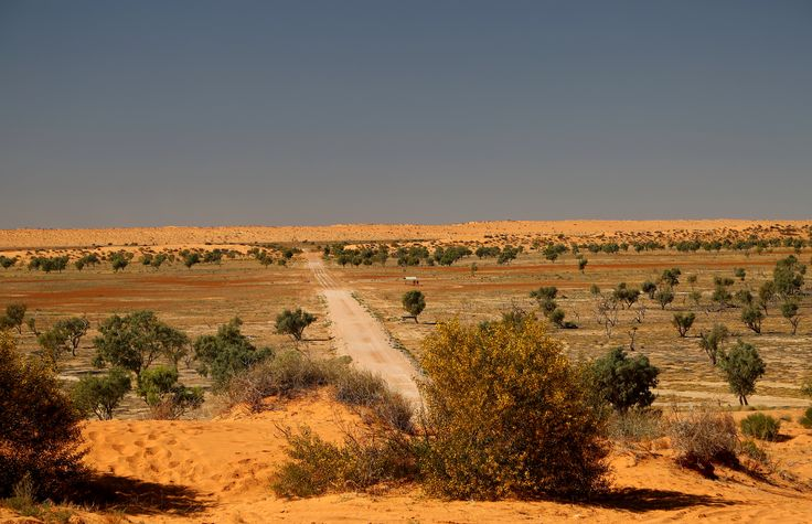 View of the track back to Birdsville from the top of big Red (the last/first dune of the Simpson Desert)