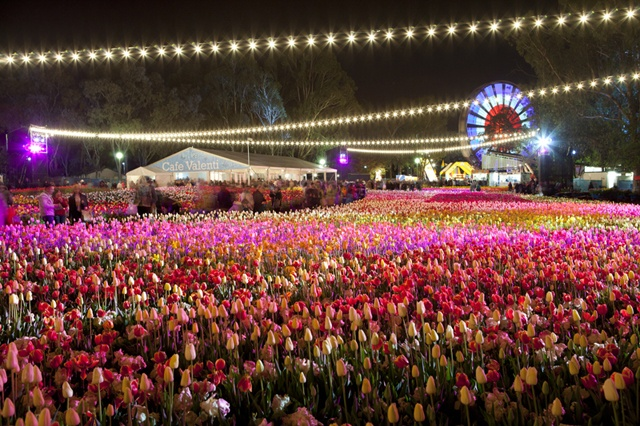 Floriade at night in Canberra until October 13th in Commonwealth Park