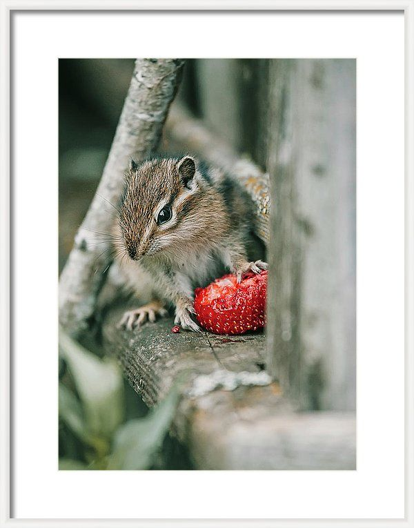 Chipmunk Framed Print featuring the photograph Cute Chipmunk With Strawberry by Oksana Ariskina