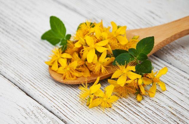 Chá da erva de São João: antidepressivo natural
