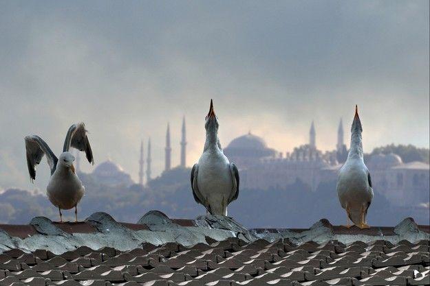 Il richiamo dei minareti