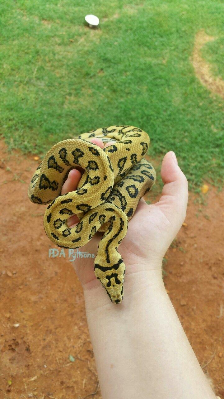 Statement Clutch - Snakes alive by VIDA VIDA BYux5