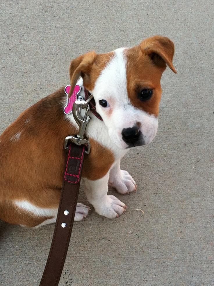 Pitador Puppy