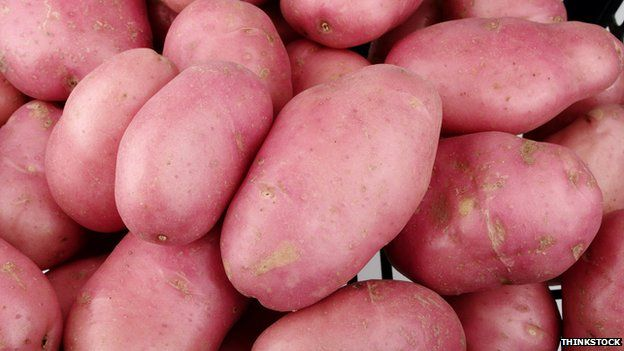 GM Desiree potatoes which can resist blight