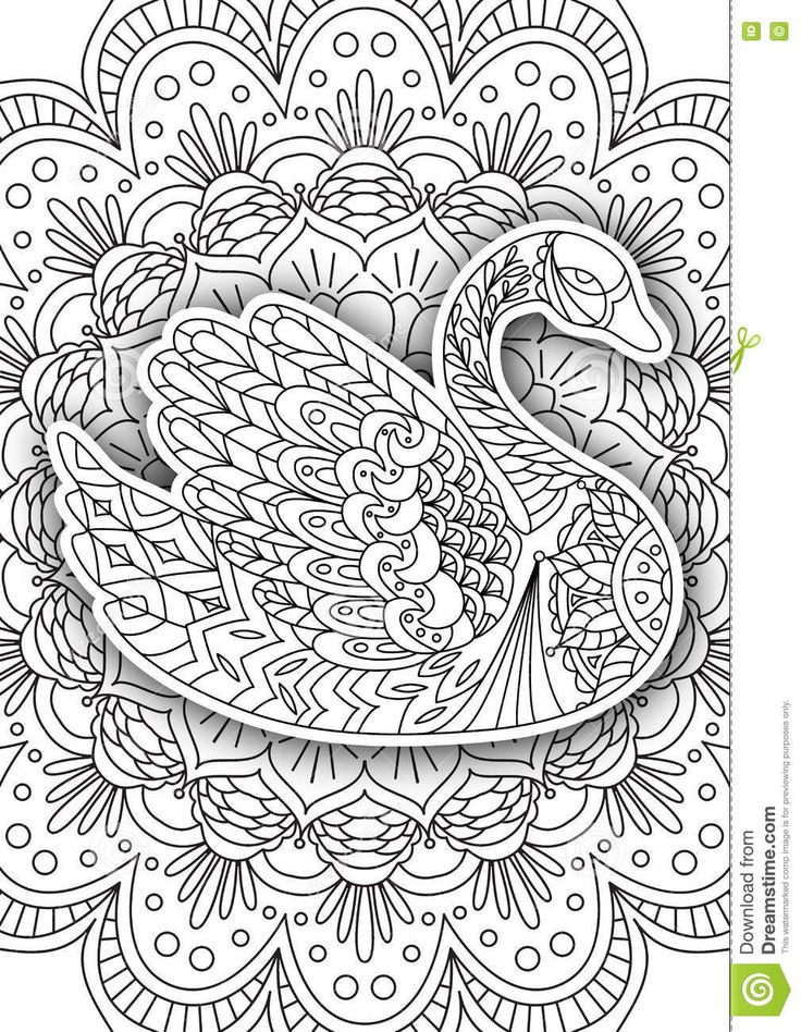 314 Best Birds Patterned Colouring Pages Images On