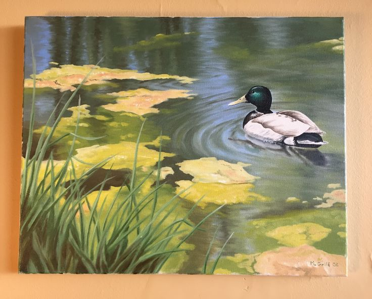 Oil painting of a mallard taking a swim in my local park (North York, Toronto).