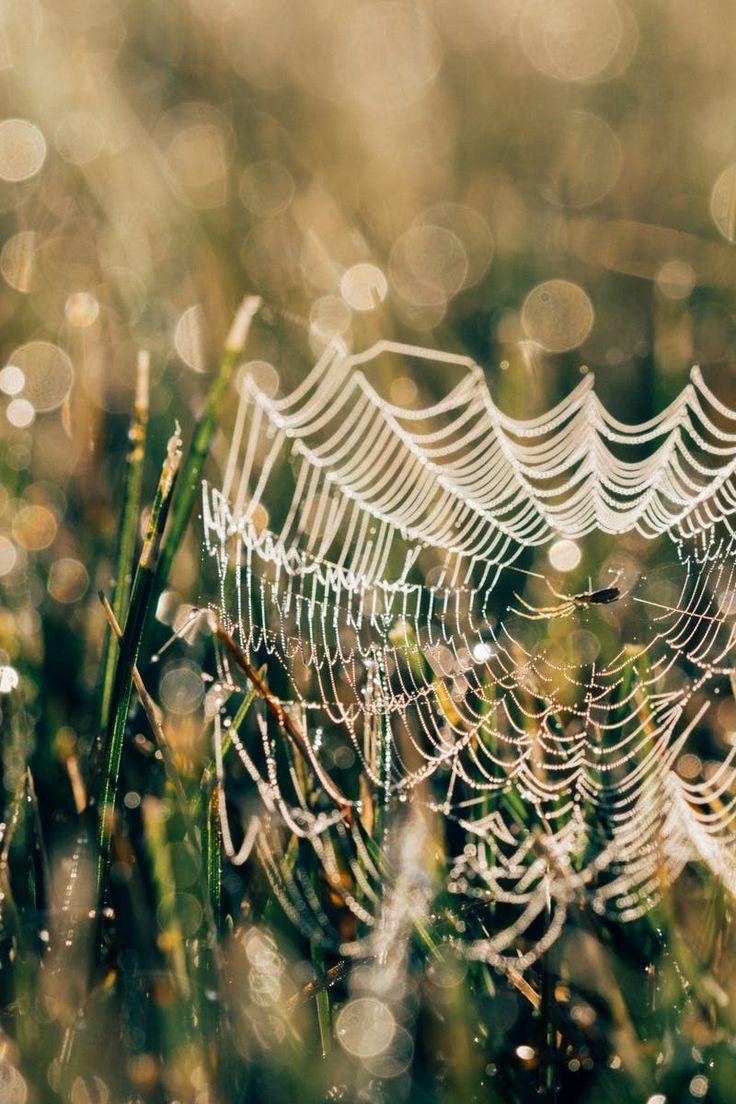 Free Stock Photo Of Grass, Spider, Spiderweb