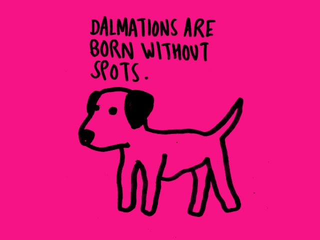 Dalmations are born without spots
