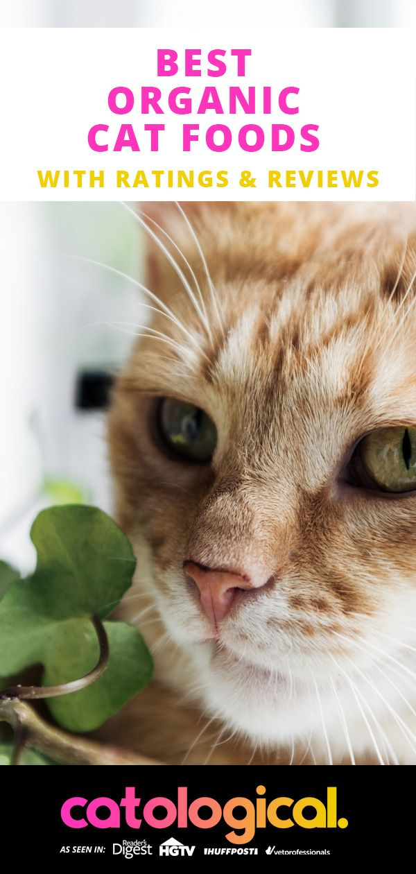 Best Organic Cat Food For Natural Wellness Wet And Dry Brand Reviews Organic Cat Food Cat Food Cat Care