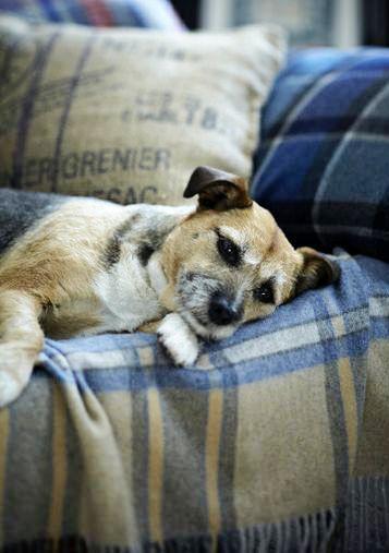 Just relaxing on my tartan throw