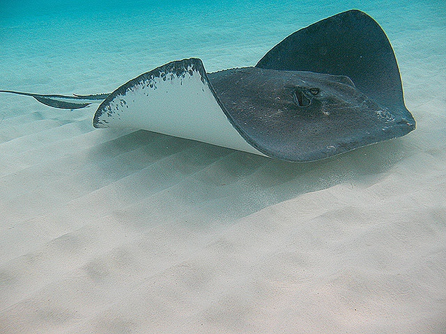 Swimming with the Stingrays in Grand Cayman!!!!