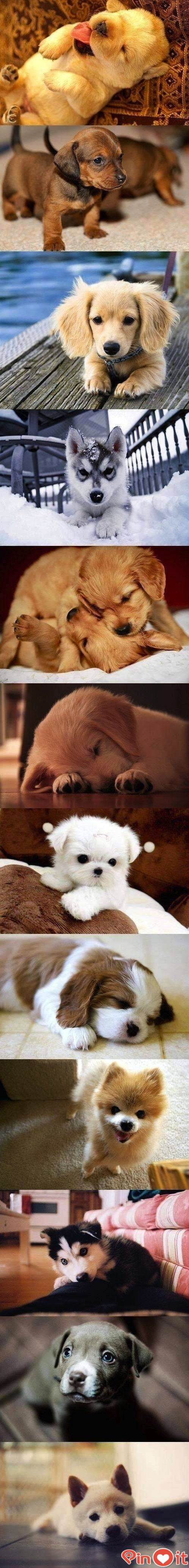 Community Post: 42 Puppies You'll Want To Take Home With You