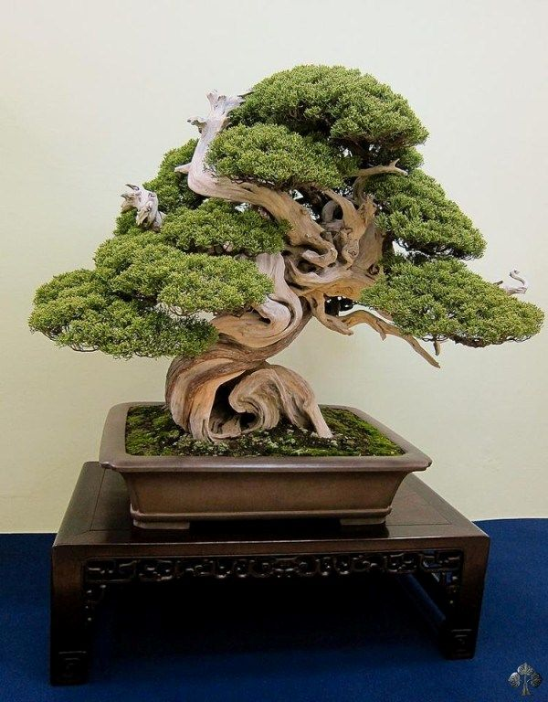 Bonsai shows en tentoonstellingen in 2013 - Bonsai Empire