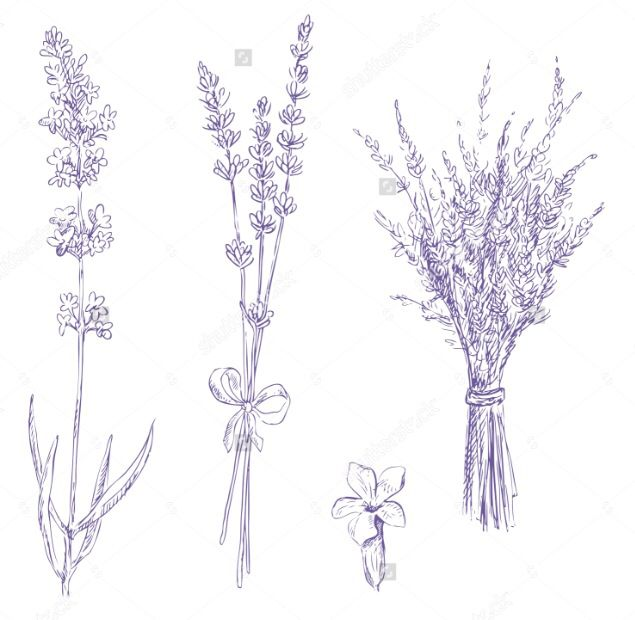 25 Best Ideas About Lavender Tattoo On Pinterest Lilac