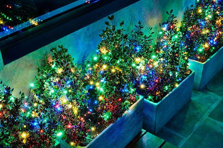 Colour bud lights for your pot plants #partydecoration