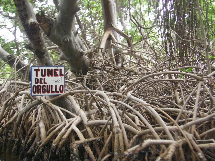 Túnel del orgullo- foto tomada en el Parque Nacional Laguna de la Restinga. Venezuela