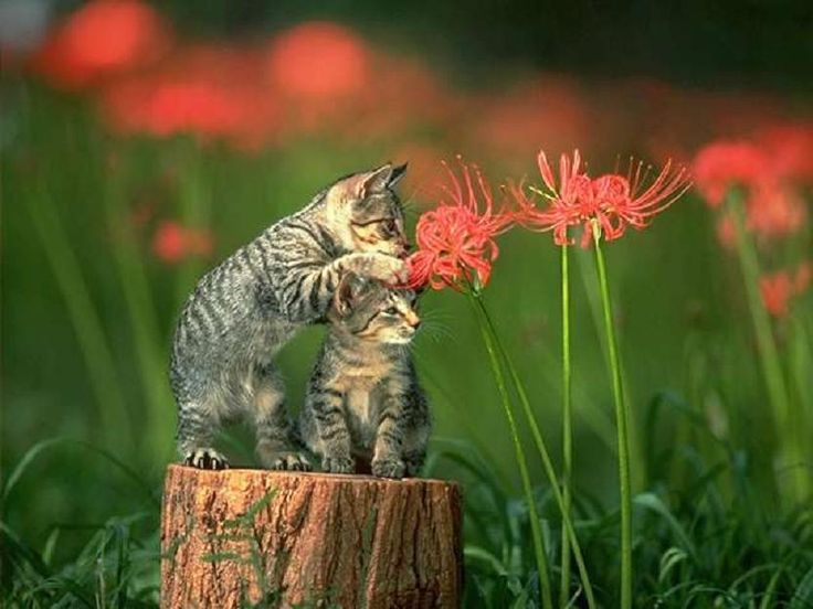 Cats and flowers. - Pixdaus