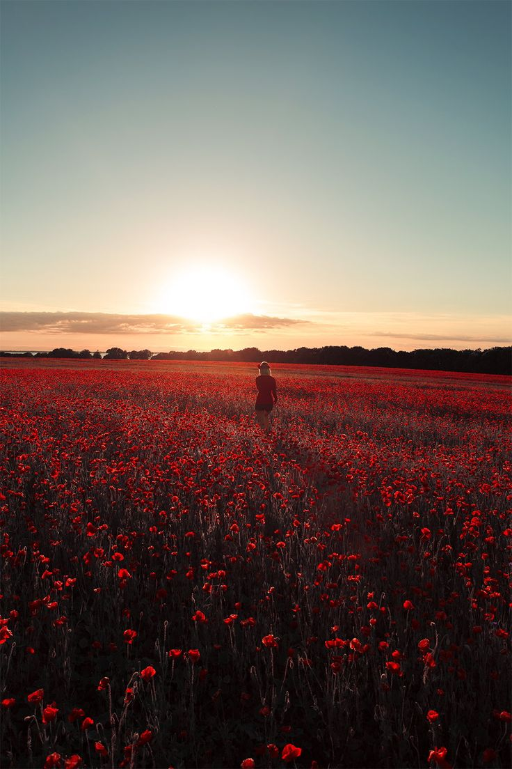 red by Philipp Sommer on 500px