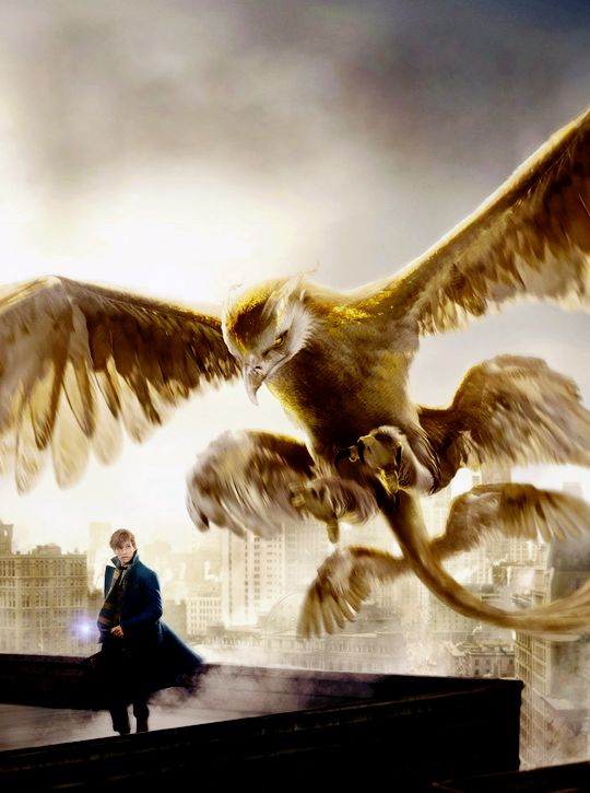 Fantastic Beasts and Where to Find Them (2016). Newt and a thunderbird.