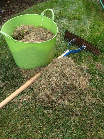 Dethatch. Thatch is the buildup of dead roots and stems that develop between the soil and the green grass blades.     If you have just a little buildup, you can use a hard rake or a dethatching rake to remove the dead grass, but if you have more than 1/2 inch you will need to core aerate in the fall or the spring
